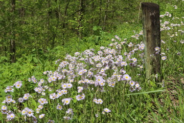 wildflowers and post