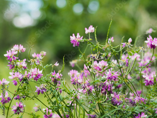 Wild pink flowers on green fields stock photo and royalty free wild pink flowers on green fields mightylinksfo