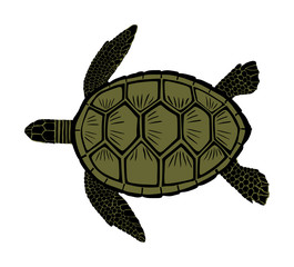 Green sea turtle vector illustration isolated on white background.