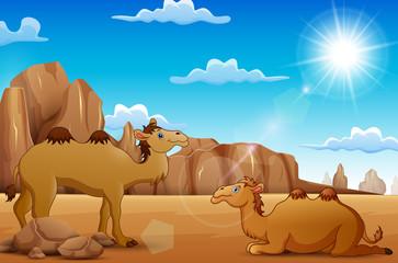 Cartoon Camels living in the desert