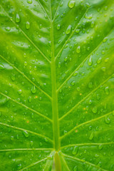 Green leaves natural background wallpaper, leaf texture,