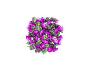Spines of the Thistle blooming with delicate pink flowers. Concept-everything has two sides. Psychology of relationships.