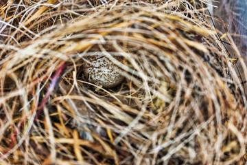Close-up of an egg in a bird nest