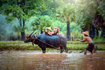 Thailand the family farmer relaxing with a buffalo on rice field after work and so happy.
