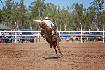 Bucking Bronc Horse At Country Rodeo