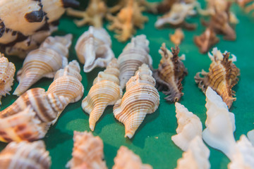 set of various sea shells on green background