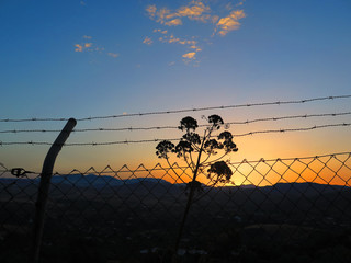 Barbed wire at dawn in Andalusian countryside