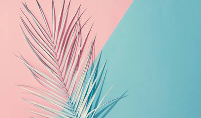 Palm leaf on pastel pink and blue background with copy space. Tropical summer concept. Minimal flat lay.