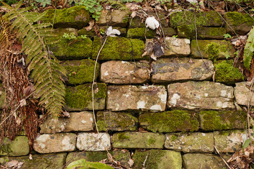Square texture of natural stone wall with green  grass growing between cobbles and moss