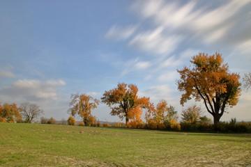 Jesienny pejzaż, krajobraz, bladozielone pole, kilka drzew z liśćmi w jesiennych barwach, błękitne niebo z szybko sunącymi chmurami, długie naświetlanie