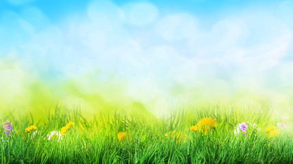 grass and flowers background