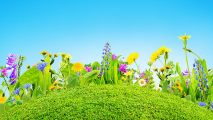grass and wild flowers background