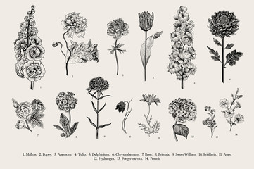 Big set flowers. Victorian garden flowers. Classical botanical vintage illustration. Black and white