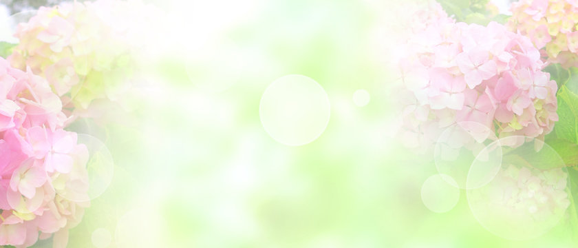 Tender pink blossoms background