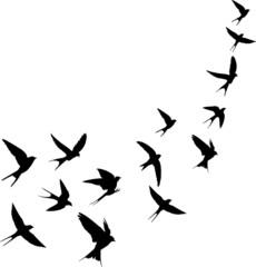 Schwalben Vogelschwarm