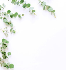 green eucalyptus branches on white background. Flat lay, top view. copy space