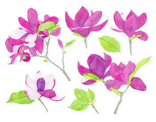 Set of watercolor magnolia flower llustration