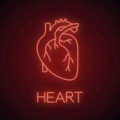 Human heart anatomy neon light icon