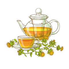 safflower tea vector illustration