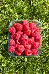 Raspberries on a plastic cup on the green grass field.