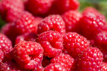 Closeup shot of fresh raspberries.
