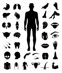 Big collection of human anatomy icons. Vector art.