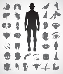 Collection of human anatomy icon set. Vector art.