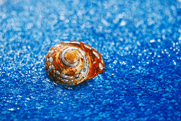 pearl exotic sea shell on blue pebble under water drops