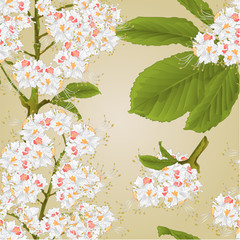 Seamless texture Chestnut tree flowers with leaves spring background vintage vector illustration editable hand draw