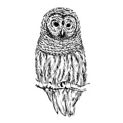 Owl sketch. Hand drawn vector illustration.