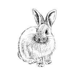 Rabbit sketch. Hand drawn vector illustration.