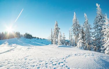 壁紙(ウォールミューラル) - Majestic winter trees glowing by sunlight. Location place Carpathian national park, Ukraine, Europe.