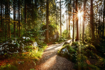 Wall Murals Road in forest Magical scenic and pathway through woods in the morning sun.