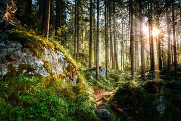 Wall Mural - Magical woods in the morning sun. Fairy forest in autumn.