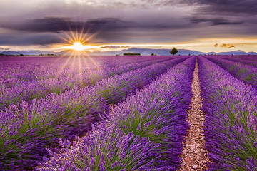 Vivid lavender field during picturesque sunset. Endless fields, typical sign of region. Amazing...