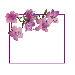 Hand sketched frame of rhododendron Ledebour. Vector illustration of pink flowers with green leaves. Isolated composition of maralnik for postcard, print, decoration, backgrond. endemic of Altai
