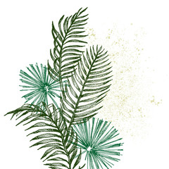 Hand drawn branches and leaves of tropical plants palm. Exotic object floral illustration isolated on white background. High detailed botanical illustration