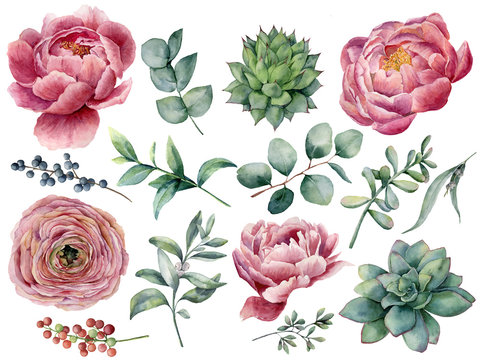 Watercolor peony, succulent and ranunculus floral set. Hand painted red and blue berry, eucalyptus leaves isolated on white background. Illustration for design, print.