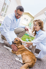 two smiling veterinarians palming dog on yard at veterinary clinic