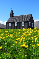 Budir black church with field of buttercups, snaefellsnes peninsula, iceland