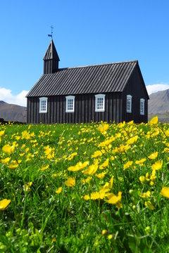 Budir black church with field of buttercups, snaefellsnes peninsula, iceland
