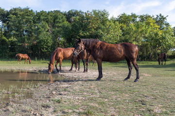 Horses on the meadow beside lake at animal shelter.