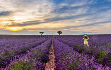 Jeune femme dans un champ de lavande en Provence le soir, France
