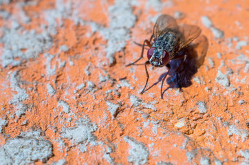 housefly close-up on a bricklaying