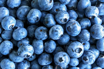 Fresh blueberry background. Concept of healthy and dieting eating. Flat lay, top view
