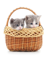 Two small kittens in the basket.