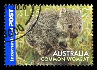 AUSTRALIA - CIRCA 2006: A stamp from Australia shows image of a Common wombat (Vombatus ursinus), circa 2006