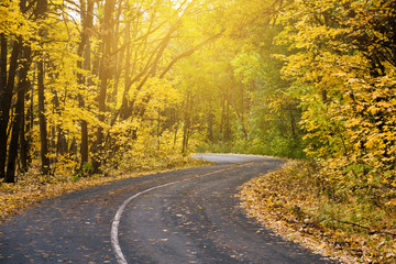 Sunny road in autumn forest