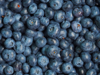 Vaccinium corymbosum, the northern highbush blueberry. Fresh sweet blueberry background. Close-up swamp huckleberry blue-black berry texture, top view