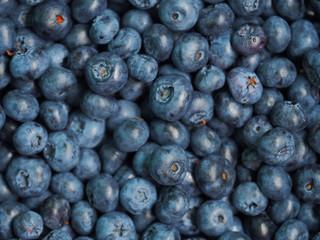 Vaccinium corymbosum, the northern highbush blueberry. Fresh sweet blueberry background. Close-up swamp huckleberry blue-black berry texture, top view